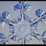 雪ですね…  白くてふわふわ 美しい結晶