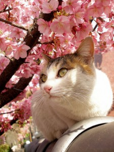 ポカポカ陽気の中で。春のお便り♡想うこと♡2016スプリング♡
